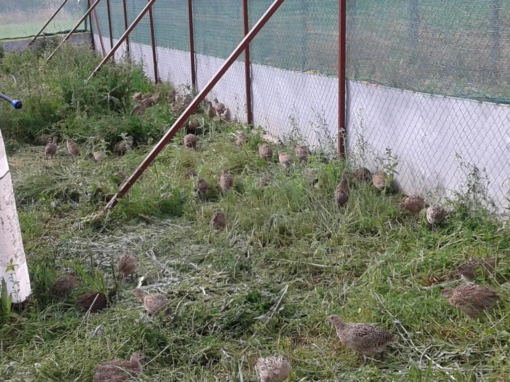 Prihvatilište za fazane